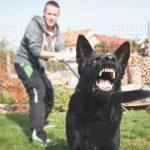 Отвечают ветеринары: почему на одних людей собака лает, а на других — нет?
