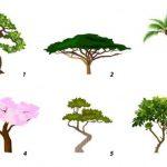 Выберите дерево и узнайте свою доминирующую черту характера