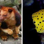 15 фото редких животных, доказывающих, что природе ещё есть, чем нас удивить