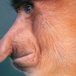 15 видов животных на грани исчезновения