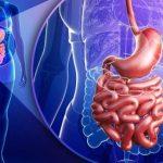 11 фактов, которые откроют вам глаза на наше пищеварение