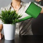 Вот что нужно делать, когда уезжаешь и некому полить цветы дома
